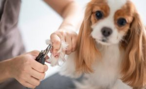 Best Dog Nail Clippers Black Friday Deals